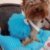 Blue Dog Tulle Skirt