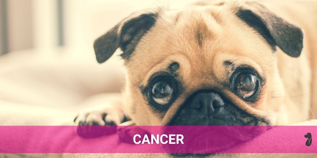 DOG MONTHLY HOROSCOPE JULY CANCER