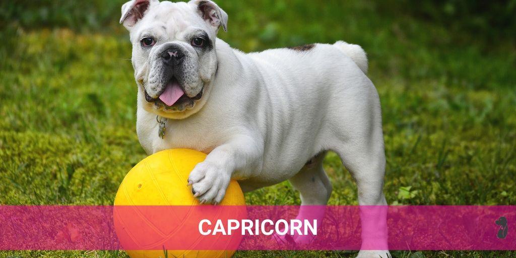 MONTHLY DOG HOROSCOPE JULY CAPRICORN