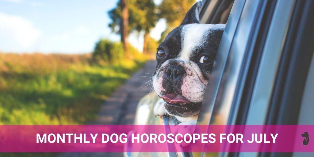 MONTHLY DOG HOROSCOPE JULY