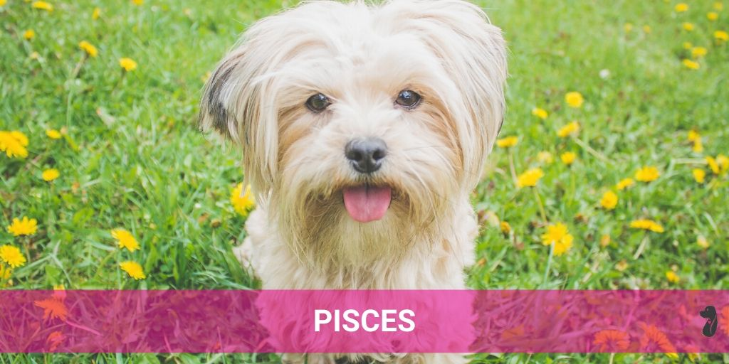 MONTHLY DOG HOROSCOPE JULY PISCES