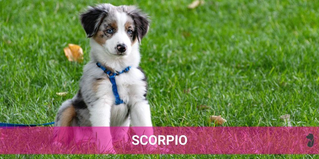 MONTHLY DOG HOROSCOPE JULY SCORPIO