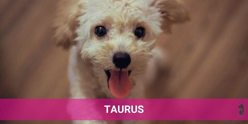 MONTHLY DOG HOROSCOPE JULY TAURUS