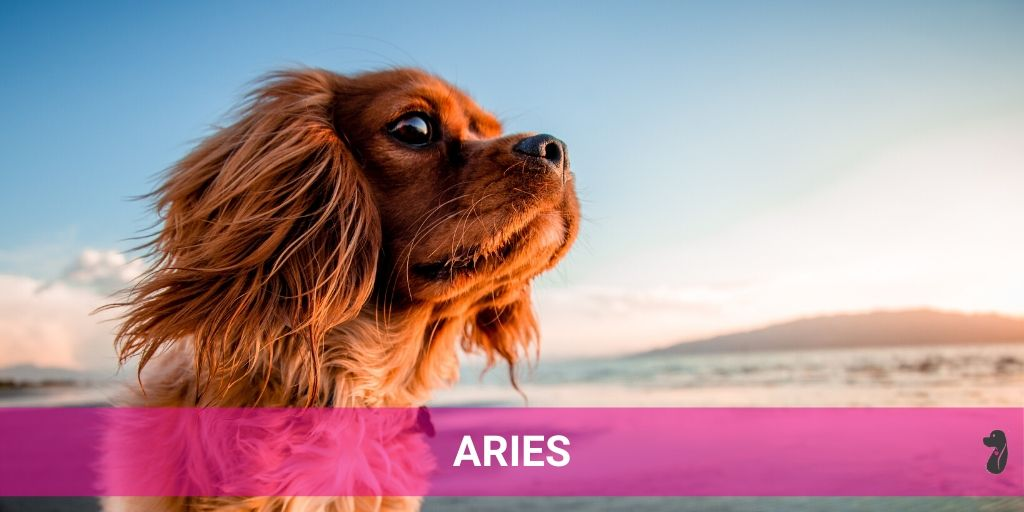 DOG MONTHLY HOROSCOPE JULY ARIES