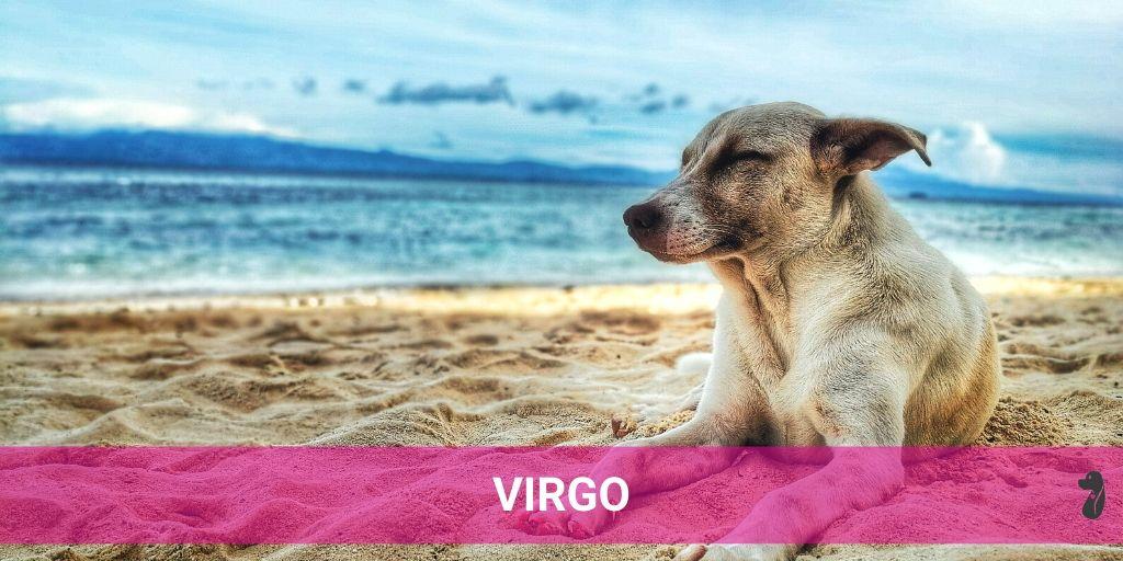 MONTHLY DOG HOROSCOPE JULY VIRGO